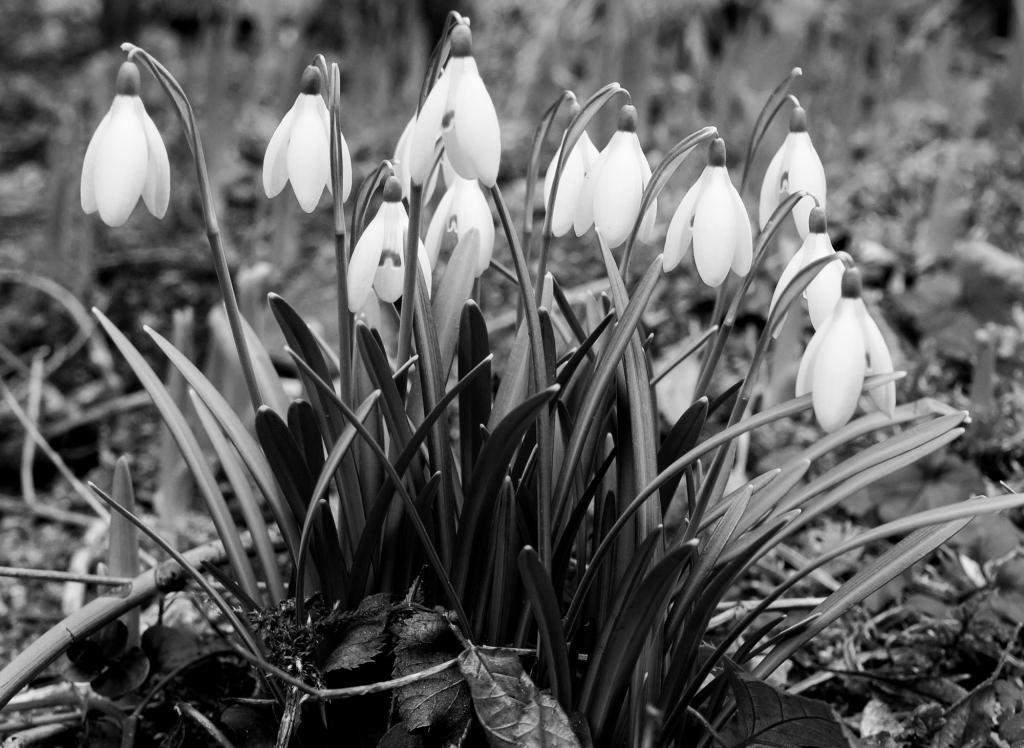 Flowers, February 2019