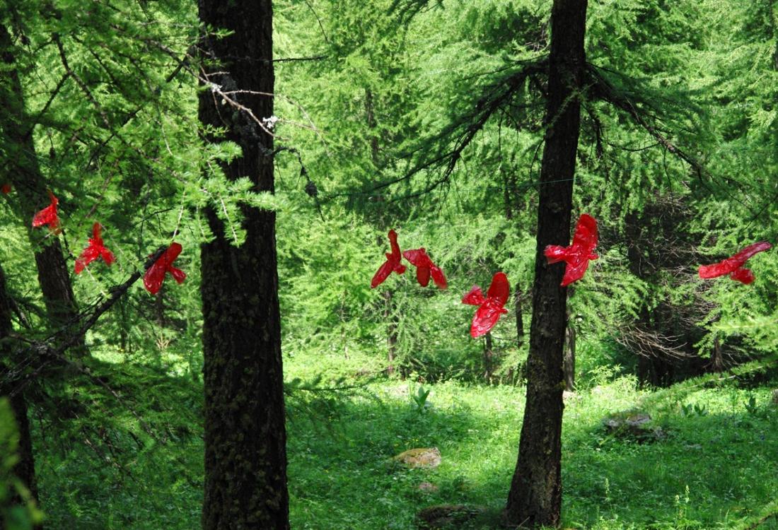 Swarm, installation, 2010