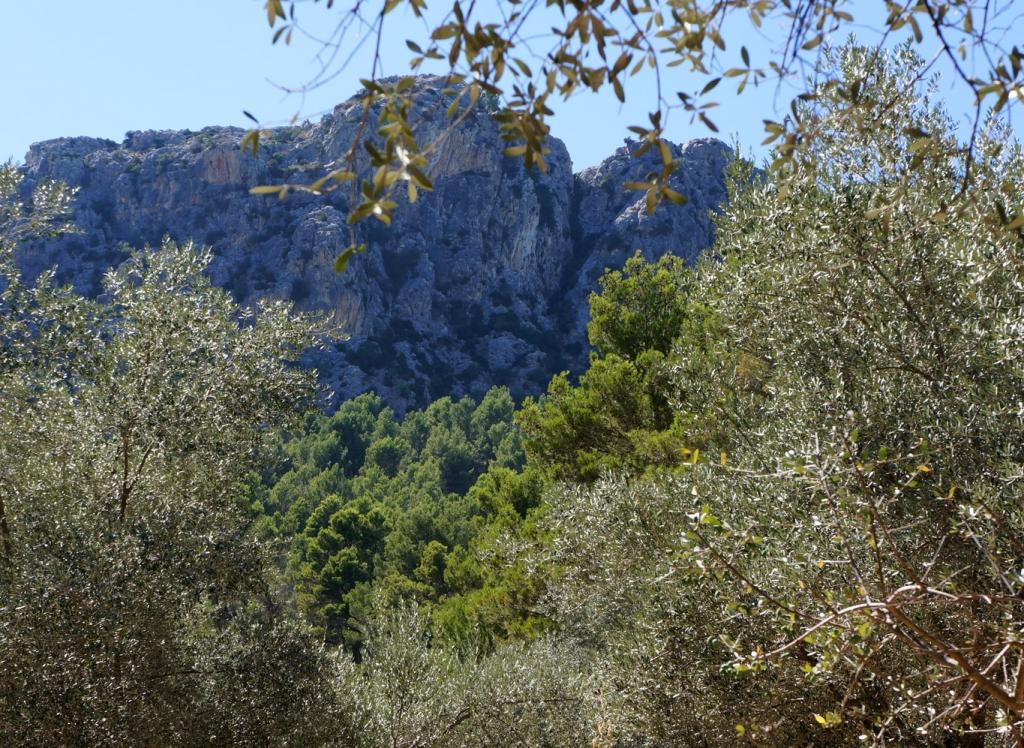 Puig Galatzo view