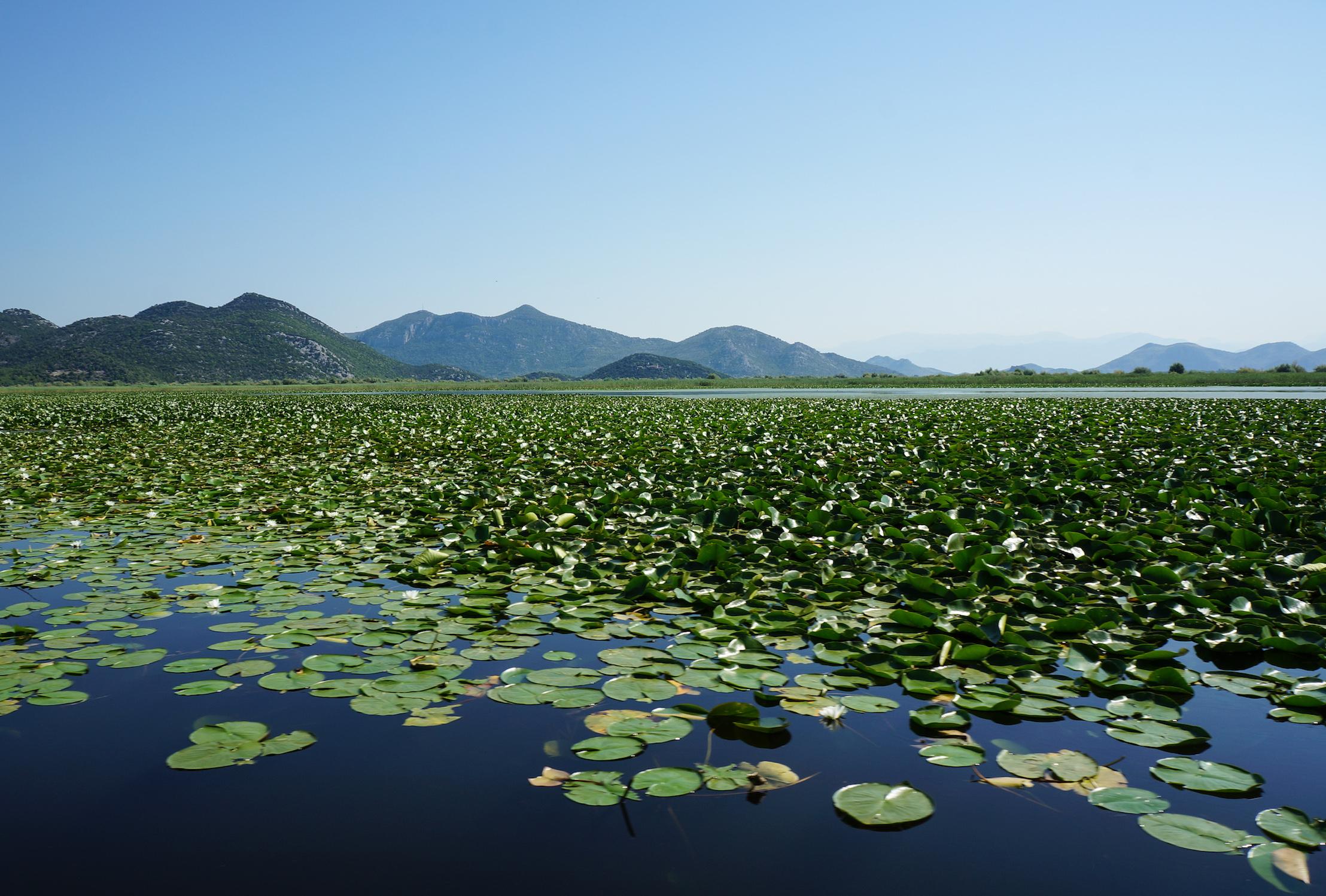 Skhodar Lake view, 2019